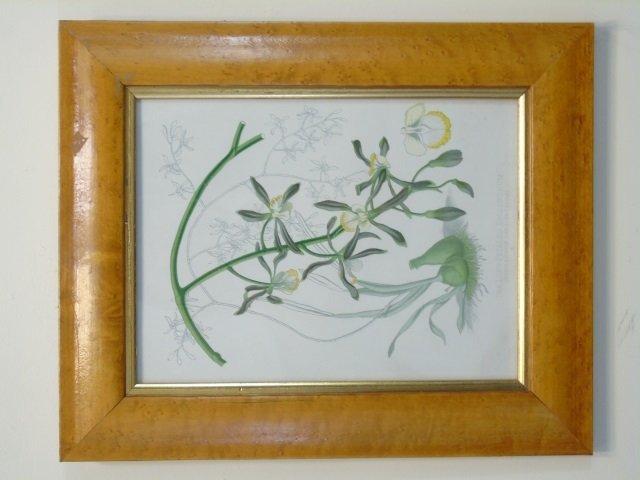 Pair Bird Eye Maple Frame Antique Botanical Prints - 2