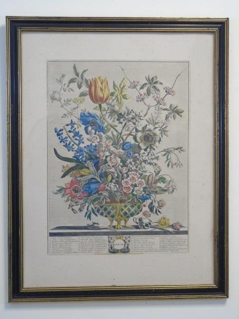 Pair Framed Vintage Color Lithograph Botanicals - 3