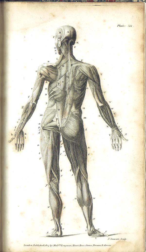 1825,Sandwith, Thomas,An Introduction To Anatomy And