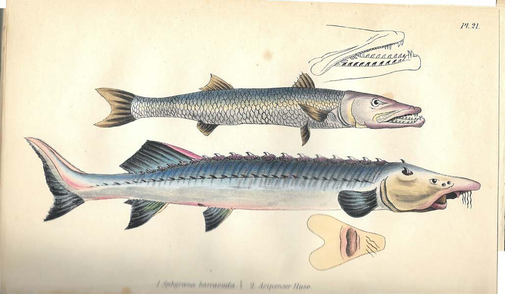 1838 Medical Zoology, And Mineralogy