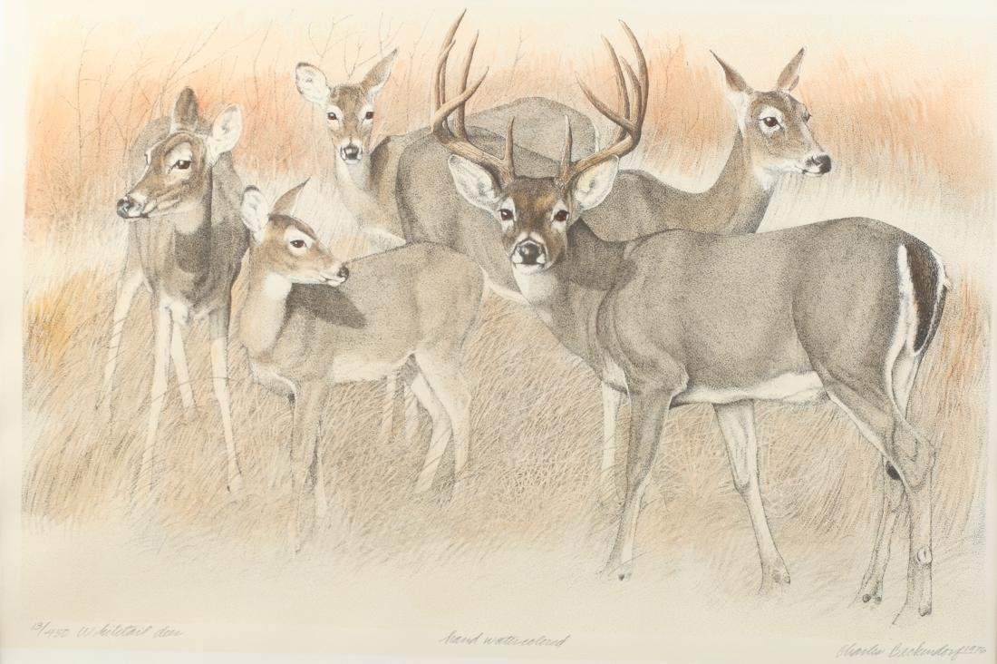 Charles Beckendorf (Am. 1930-1996), Whitetail Deer,