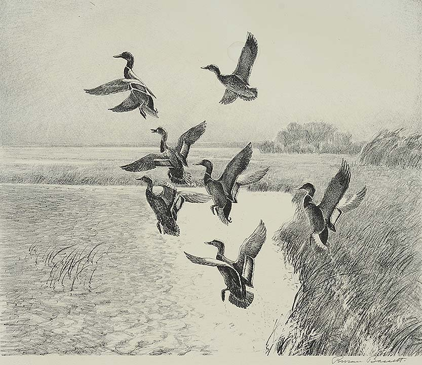 11: Ducks in Flight