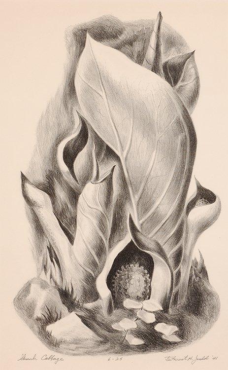 Skunk Cabbage, 1941