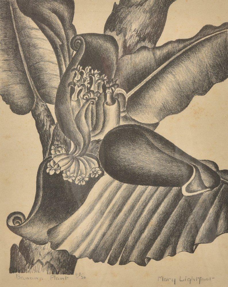 Mary  Lightfoot, Banana Plant; Ed. 47/50, lithograph