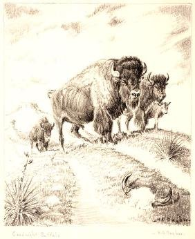 Harold D.  Bugbee, Goodnight Buffalo, lithograph