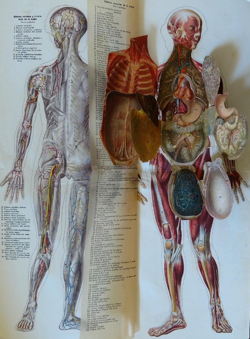 Rare Antique Multilayered Anatomy, Barcelona 1890s