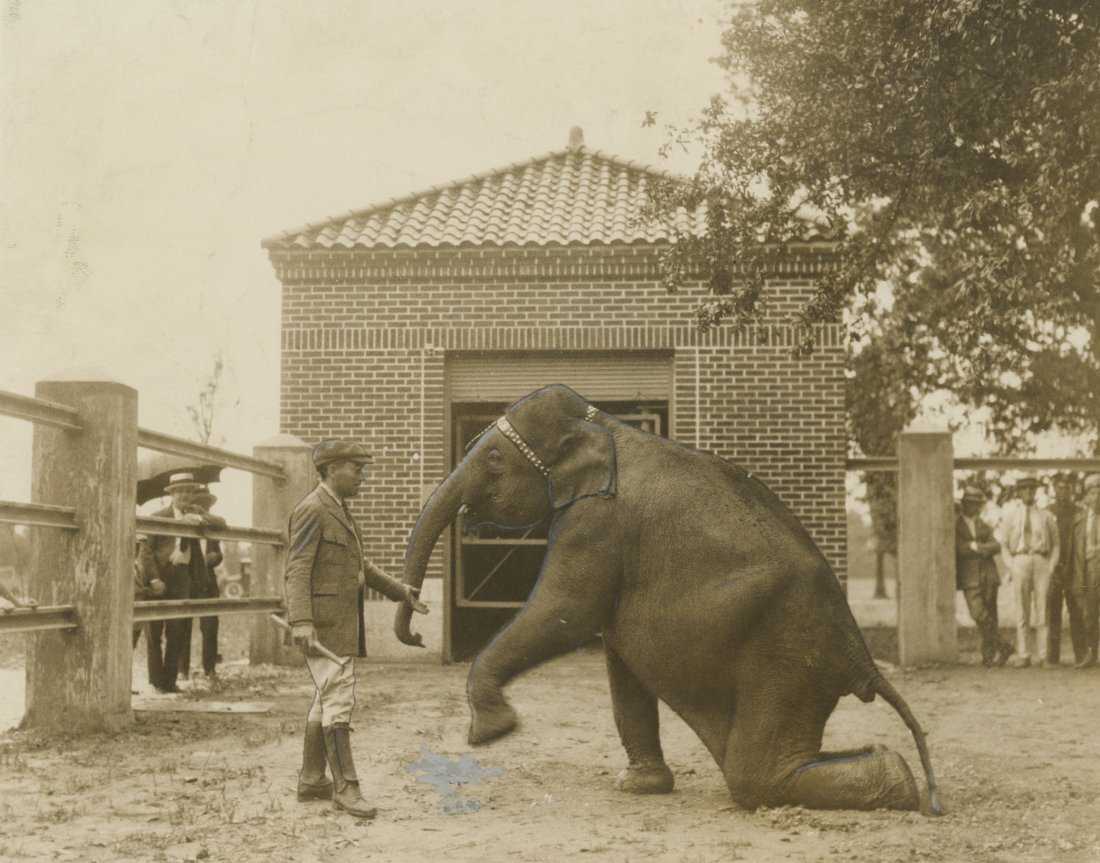 Elephant Trainer in 1926, stamp to identify.