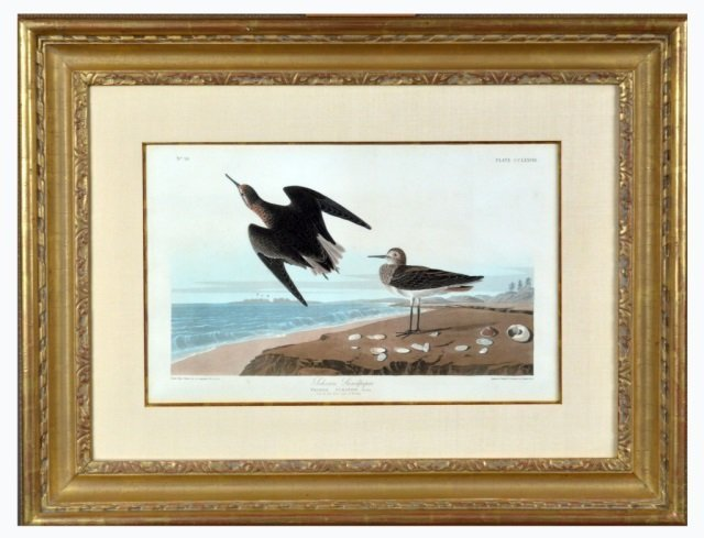 After John James Audubon (American, 1785-1851)