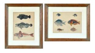 Pair of Fish Prints
