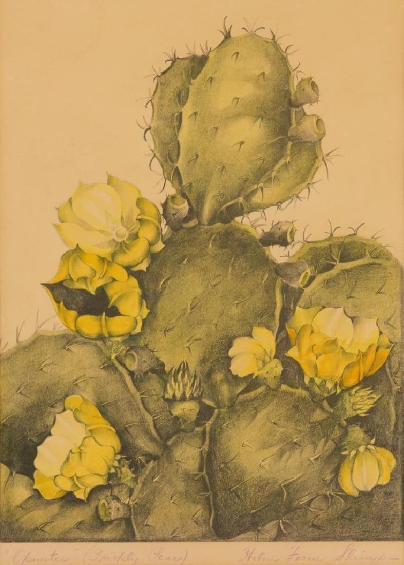 Helen Ferne Slimp (1890-1995), Blooming Cactus,