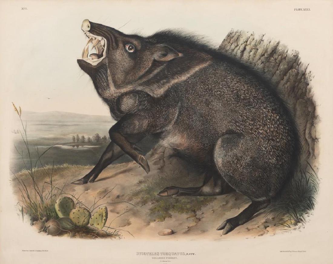 John James Audubon (1785-1851) Plate 31, Peccary