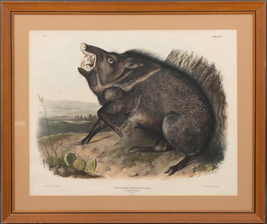 John James Audubon (1785-1851) Plate 31, Peccary - 2