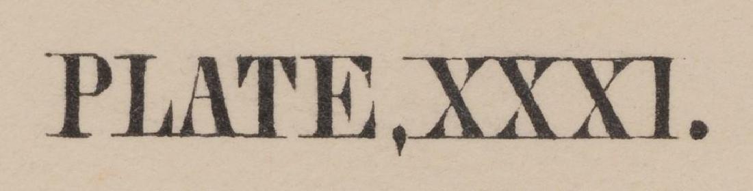 John James Audubon (1785-1851) Plate 31, Peccary - 6