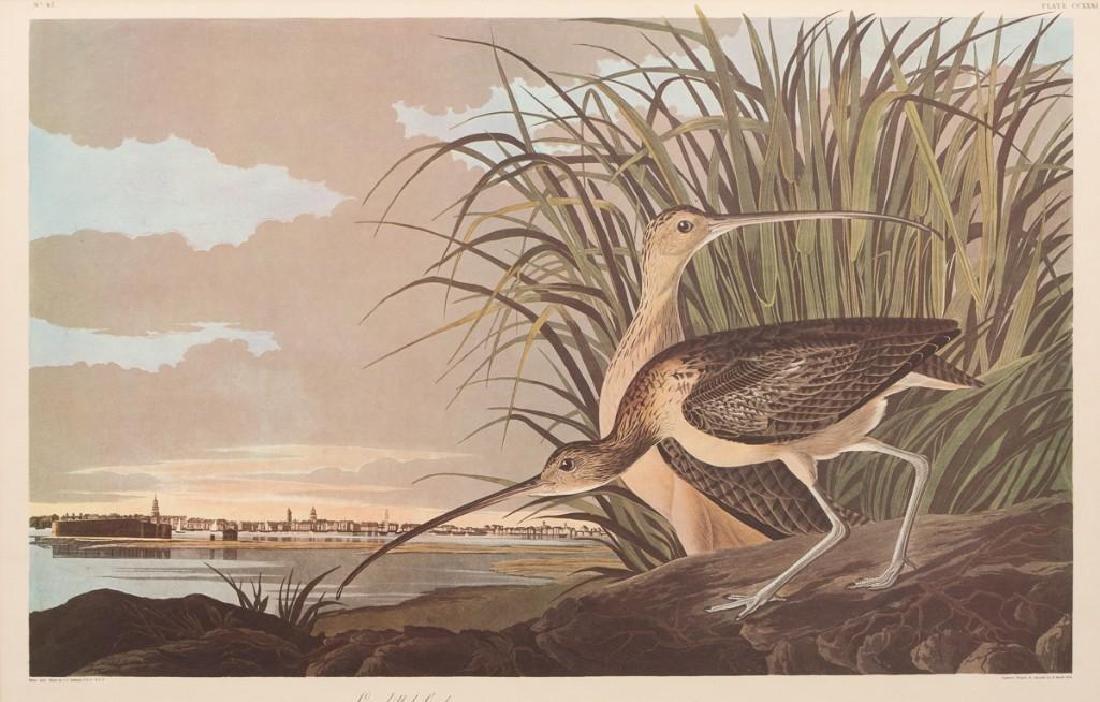 "John James Audubon (1785-1851), ""Long-Billed Curlew"","