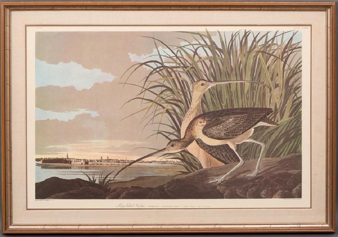 "John James Audubon (1785-1851), ""Long-Billed Curlew"", - 2"