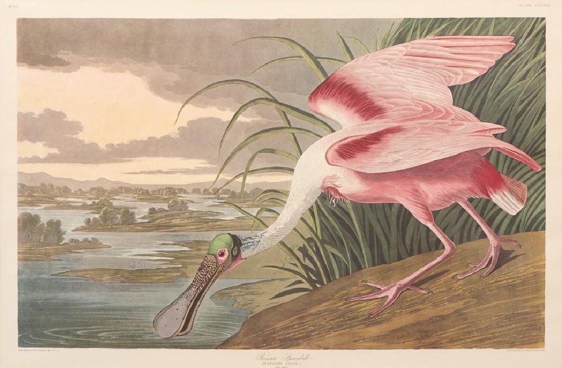 """John James Audubon (1785-1851), """"Roseate Spoonbill"""","""