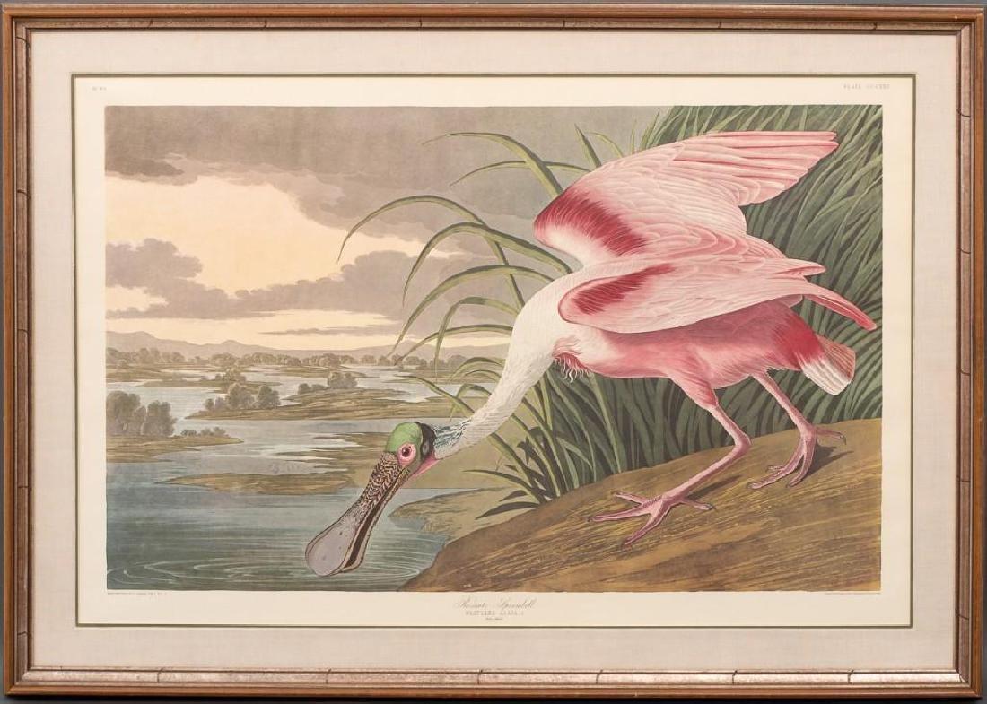 """John James Audubon (1785-1851), """"Roseate Spoonbill"""", - 2"""