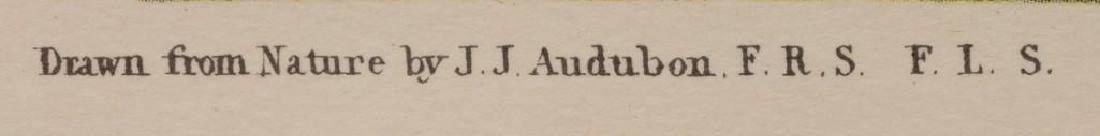 """John James Audubon (1785-1851), """"Roseate Spoonbill"""", - 5"""