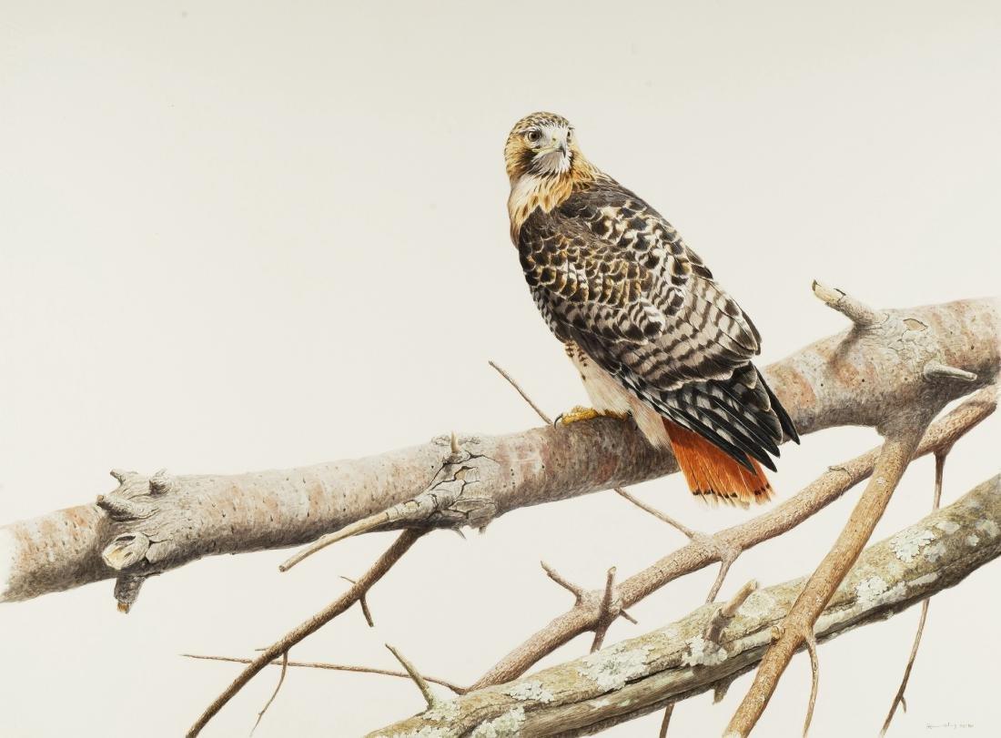 RED-TAILED HAWK by Tony Henneberg (German, born 1966)