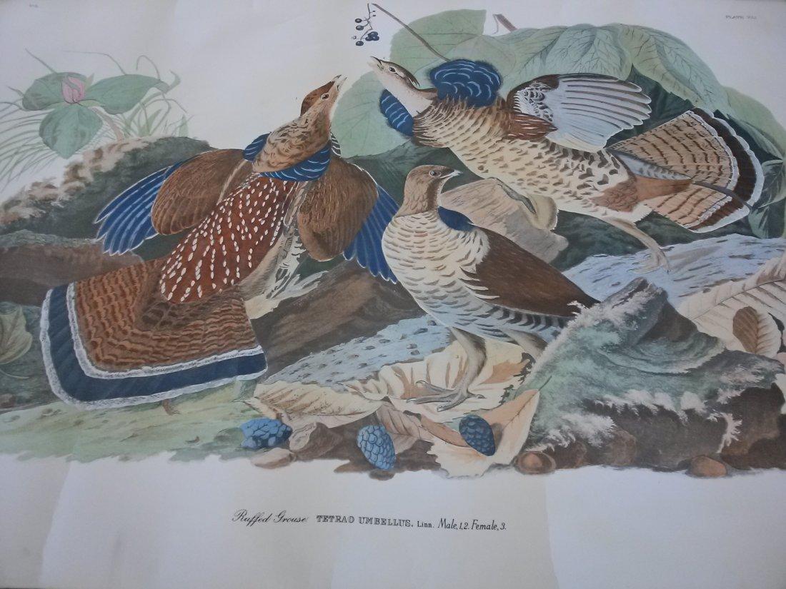 After JOHN JAMES AUDUBON BY ROBERT HAVELL Ruffled Goose