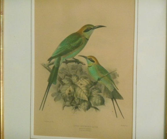 Keulemans Lithographs: Bee Eaters-Birds