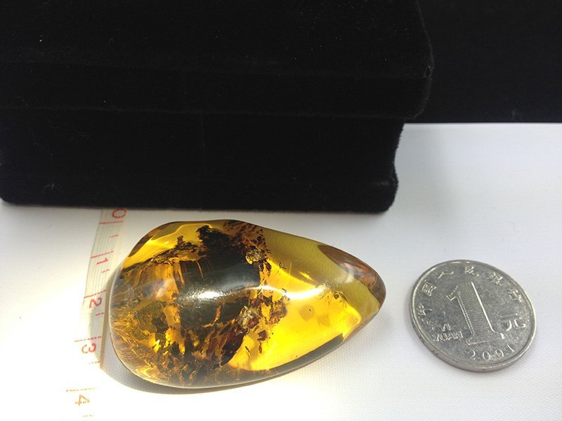 Golden Burmite Amber with Botanical inclusion