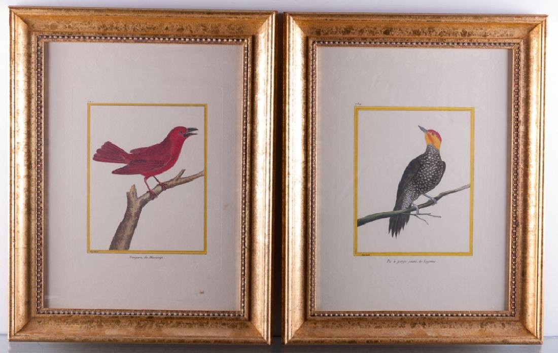 François Martinet Ornithological Prints C 1770s