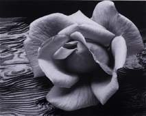 """Ansel Adams """"Rose & Driftwood"""" Lithographic Photo"""