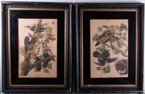 Audubon Ornithological Prints Pair