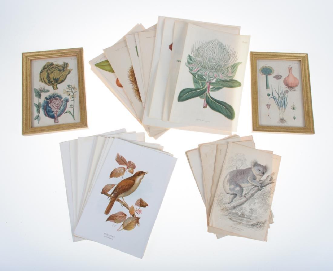 Botanical and Zoological Prints
