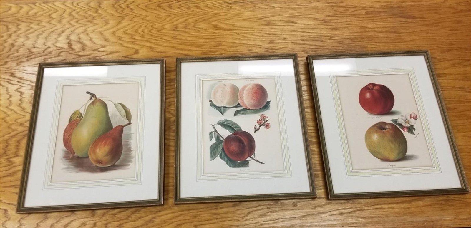 Three Still Life Prints