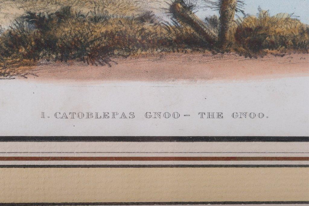 """W.C.Harris""""I. Catoblepas Gnoo-The Gnoo"""" - 4"""