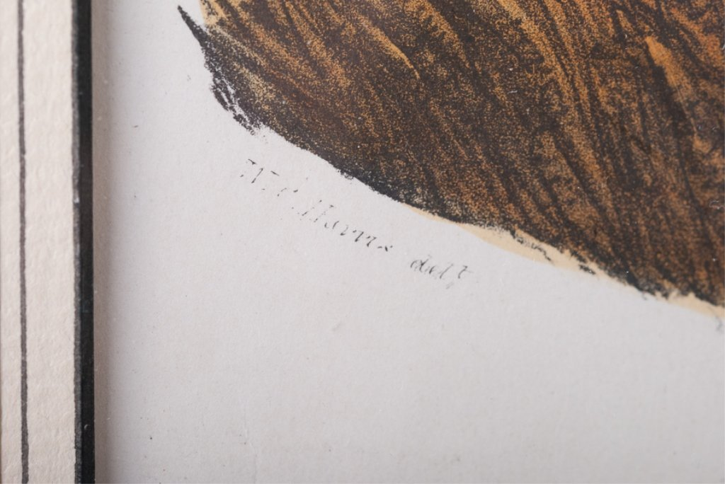 VI Boselaphus Oreas - The Eland - 3