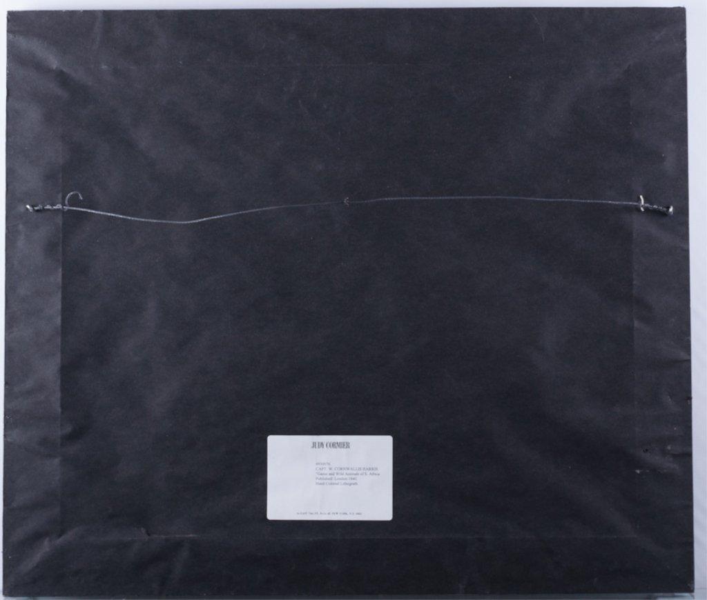 VI Boselaphus Oreas - The Eland - 6