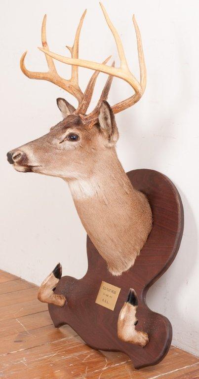 Taxidermy 9 Point Buck Head and Hooves Gun Rack