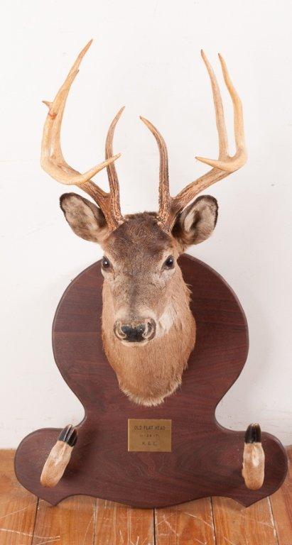Taxidermy 9 Point Buck Head and Hooves Gun Rack - 2