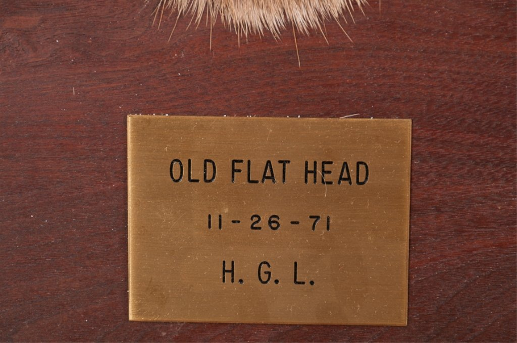 Taxidermy 9 Point Buck Head and Hooves Gun Rack - 3