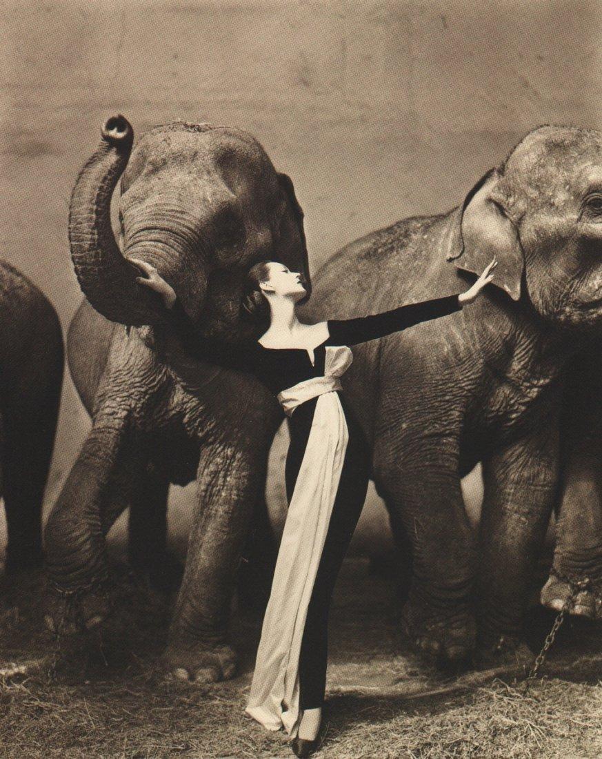 Avedon, Richard - Dovima w/Elephants 1955