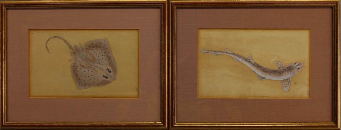 (2) Hand Colored Sea Life Engravings