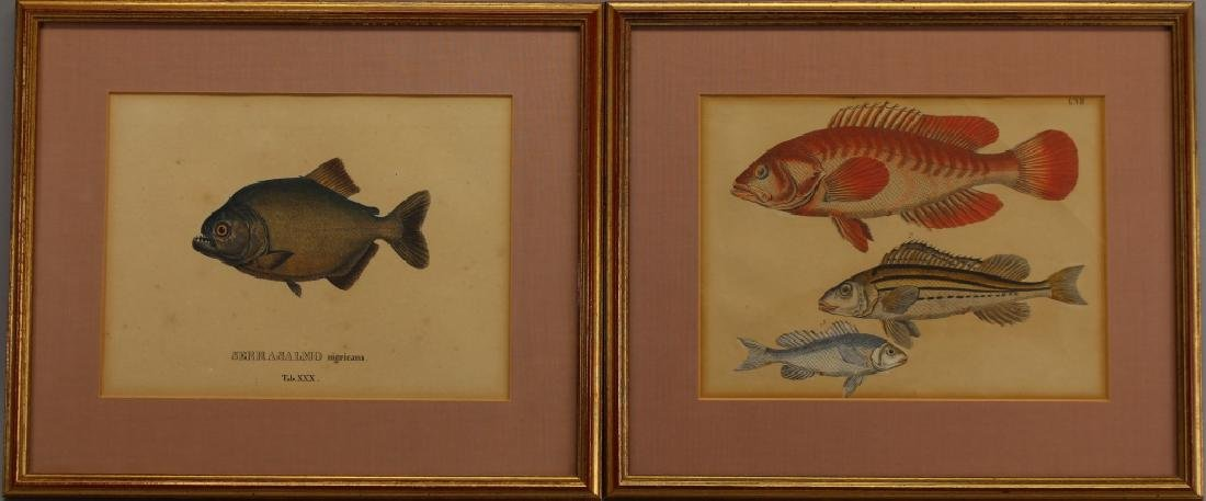 (2) Hand Colored Fish Engravings