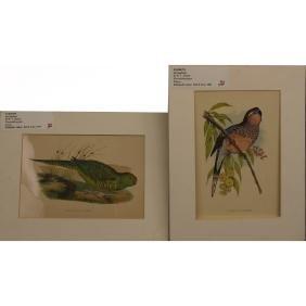 (2) Chromolithographs of Parrots
