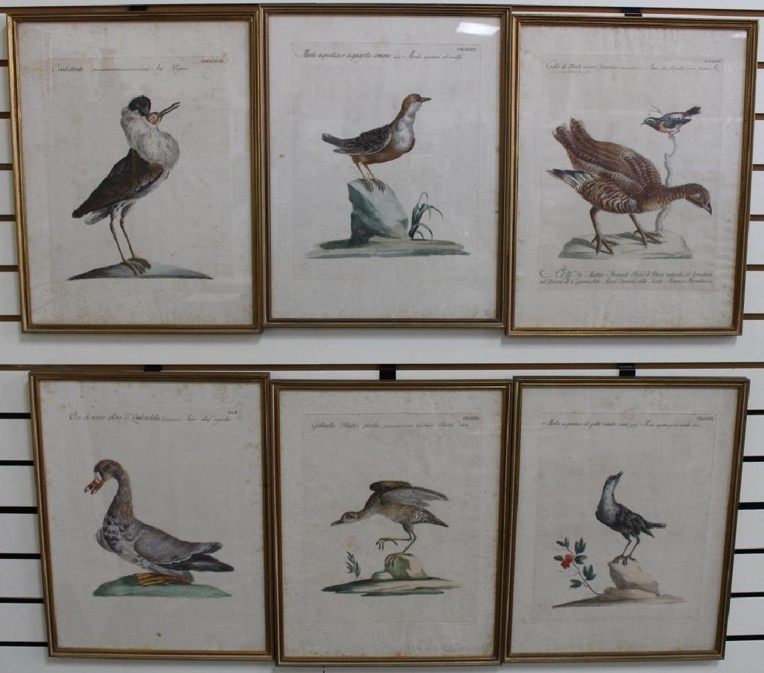 (6) Framed Antique Bird Prints
