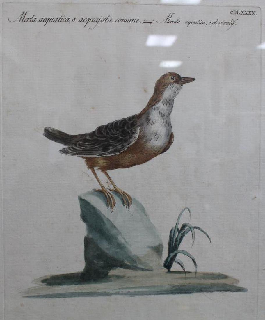 (6) Framed Antique Bird Prints - 3