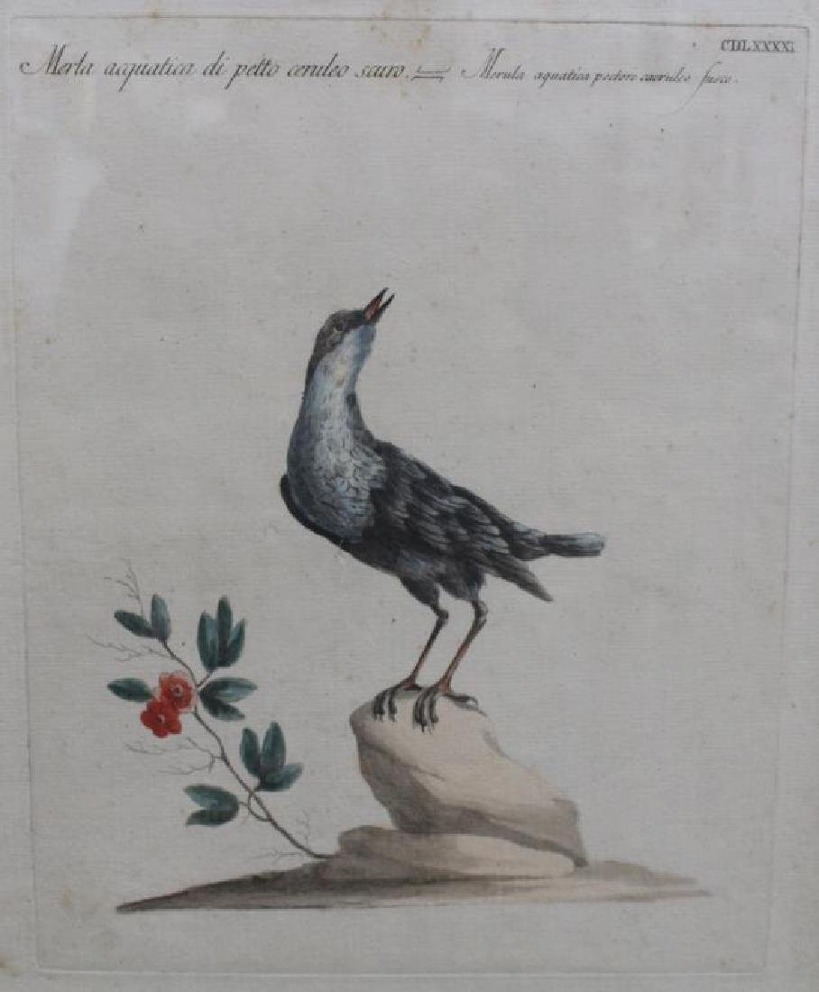 (6) Framed Antique Bird Prints - 5