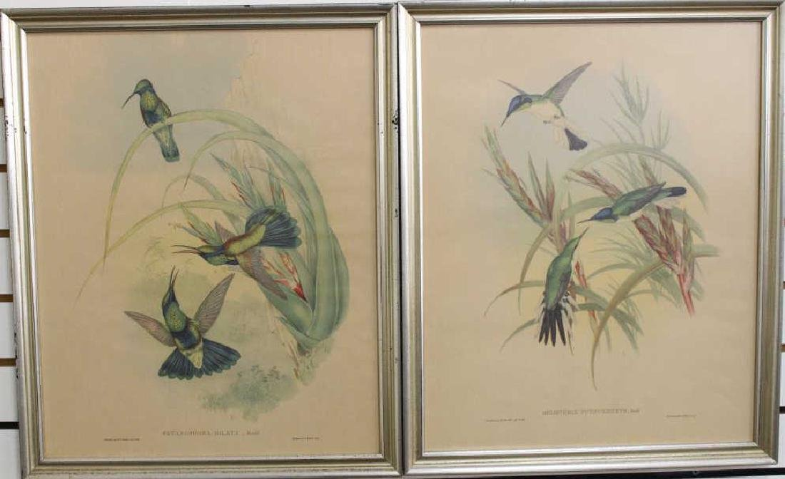 (2) Framed Antique Bird Prints