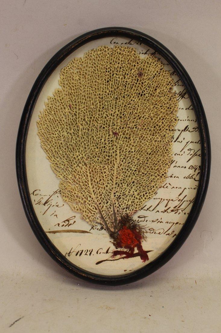 Antique Caribbean Coral Specimen on Document