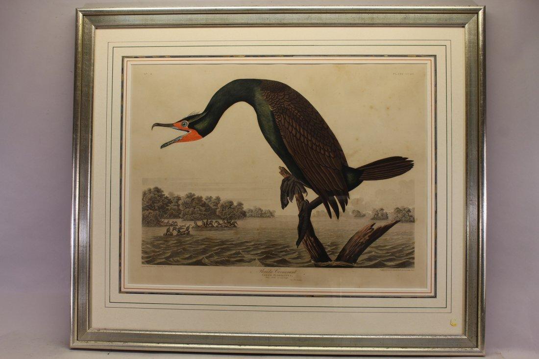 J.J. Audubon  (1785 - 1851)  Engraving