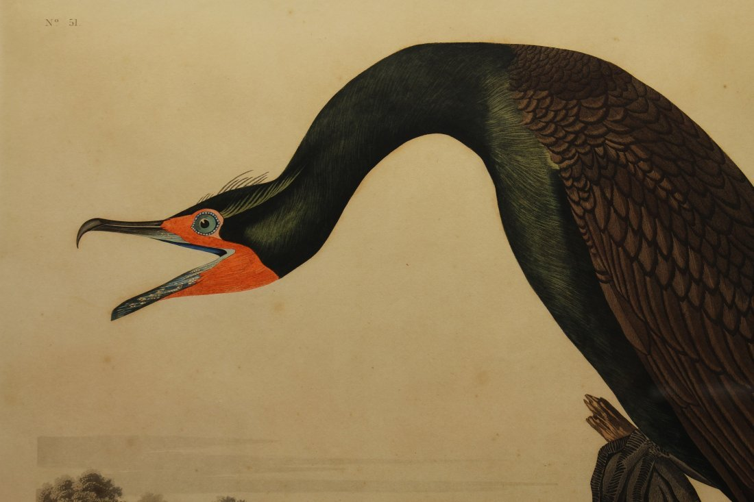 J.J. Audubon  (1785 - 1851)  Engraving - 2