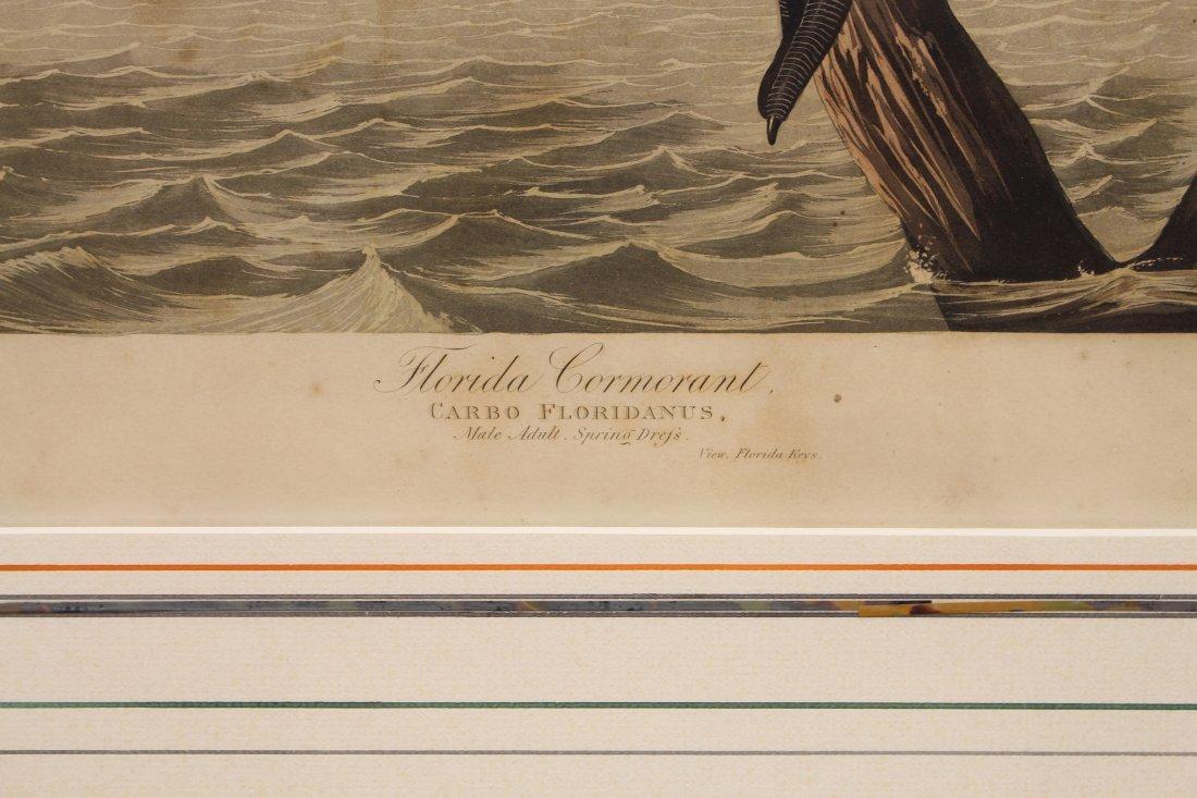 J.J. Audubon  (1785 - 1851)  Engraving - 3