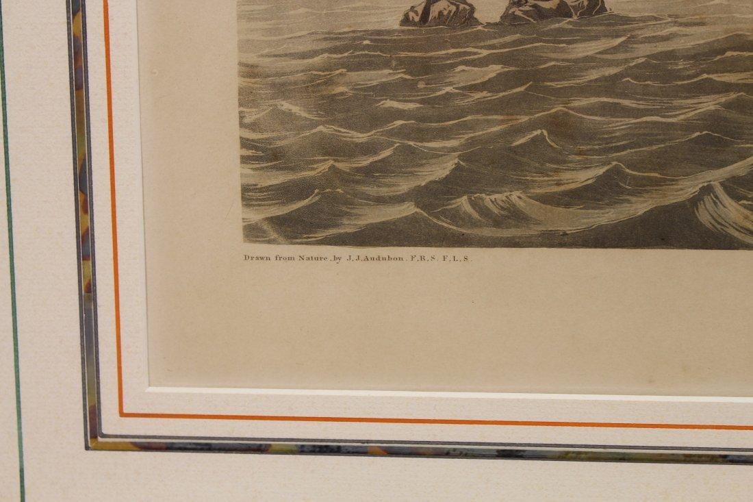 J.J. Audubon  (1785 - 1851)  Engraving - 4